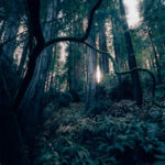 forest floor trees