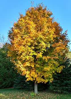 tree nature outdoors